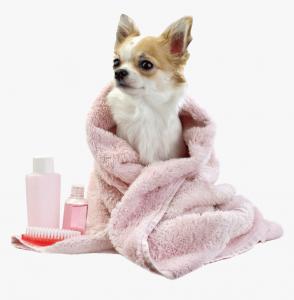 A kutya fülében felhalmozódott kosz akár fülgyulladást is okozhat